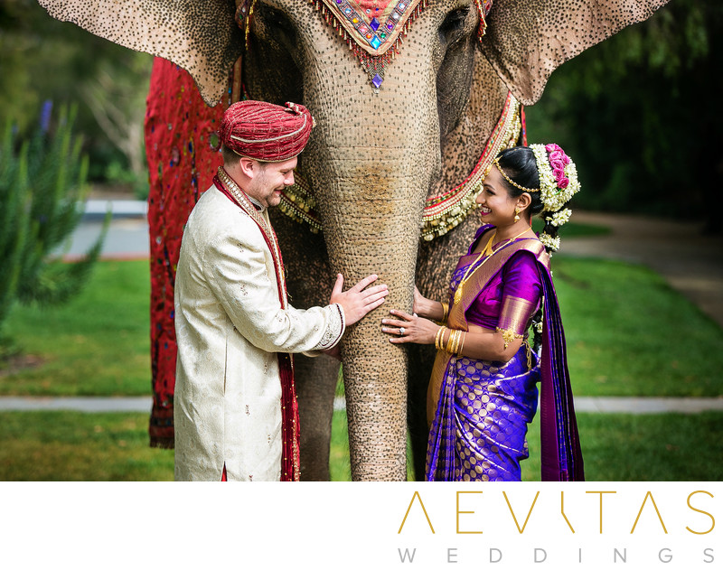 Hindu couple portrait with elephant trunk in San Diego