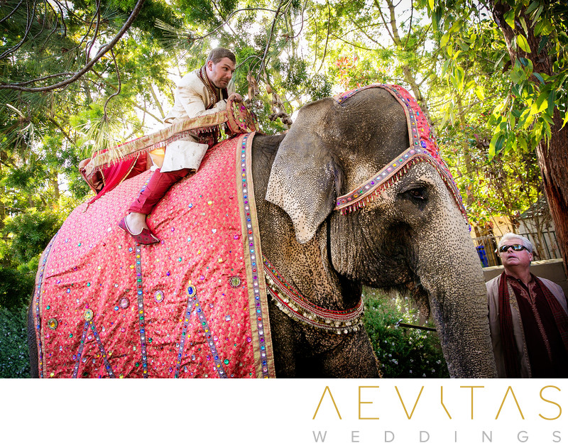 Groom on elephant at Baraat ceremony in San Diego
