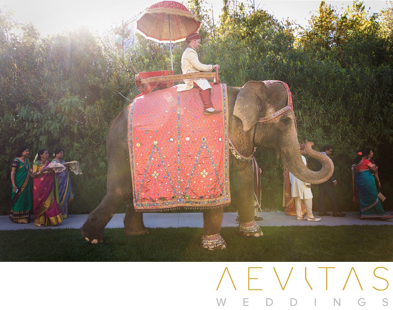 Groom on elephant during Indian Baraat ceremony