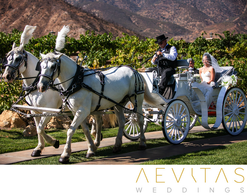 Horse and carriage at Serendipity Garden Weddings
