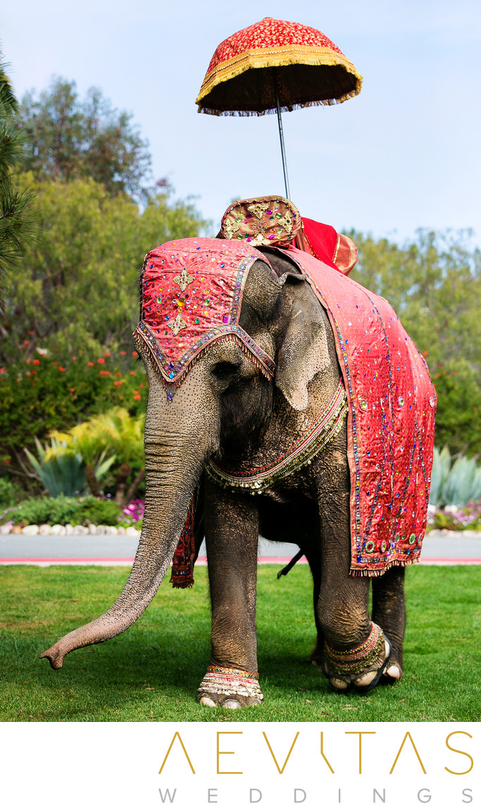 Decorated elephant at Indian wedding in San Diego