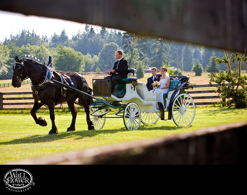 Bride and groom ride in horse-drawn carriage