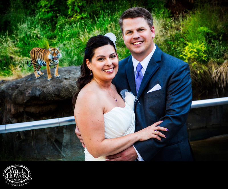 Bride and groom pose with tiger at Point Defiance Zoo