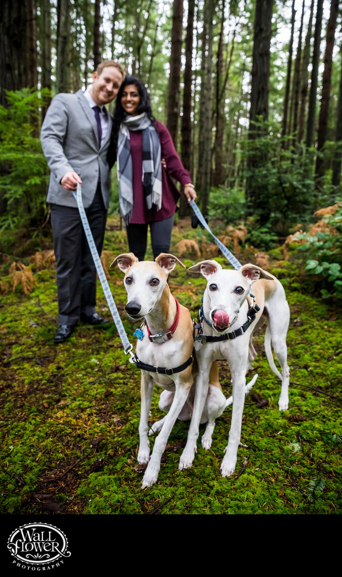 Engagement portrait with twin whippet dogs in forest