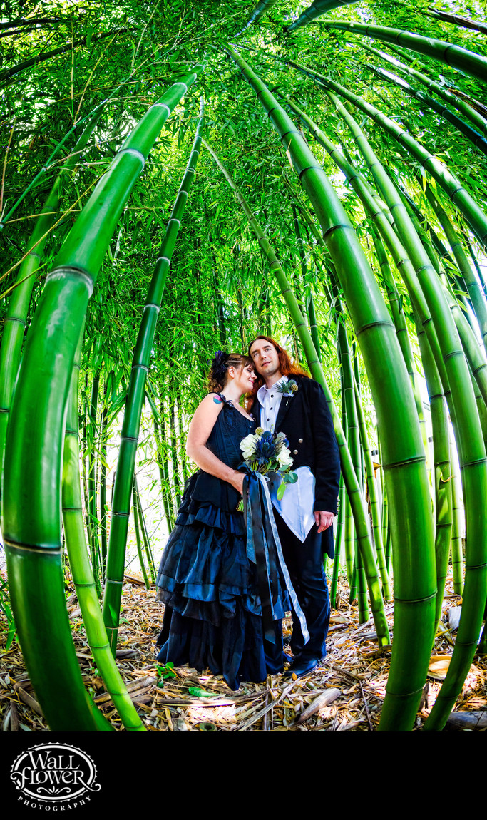 Groom with bride in black dress inside bamboo grove