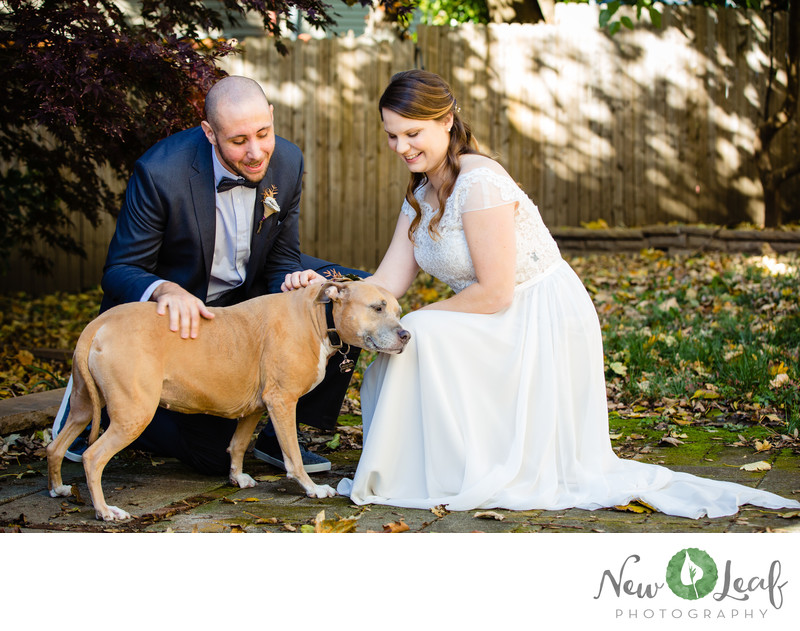 Dog Friendly Wedding Photographers