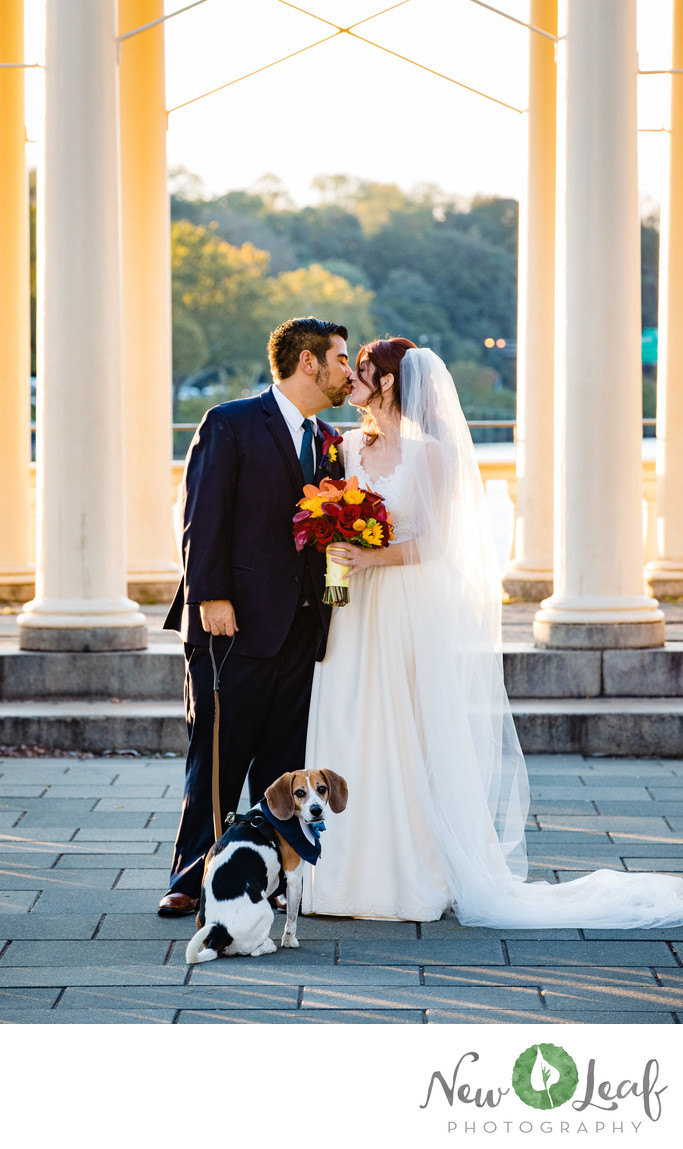Pet-Friendly Weddings in Philadelphia