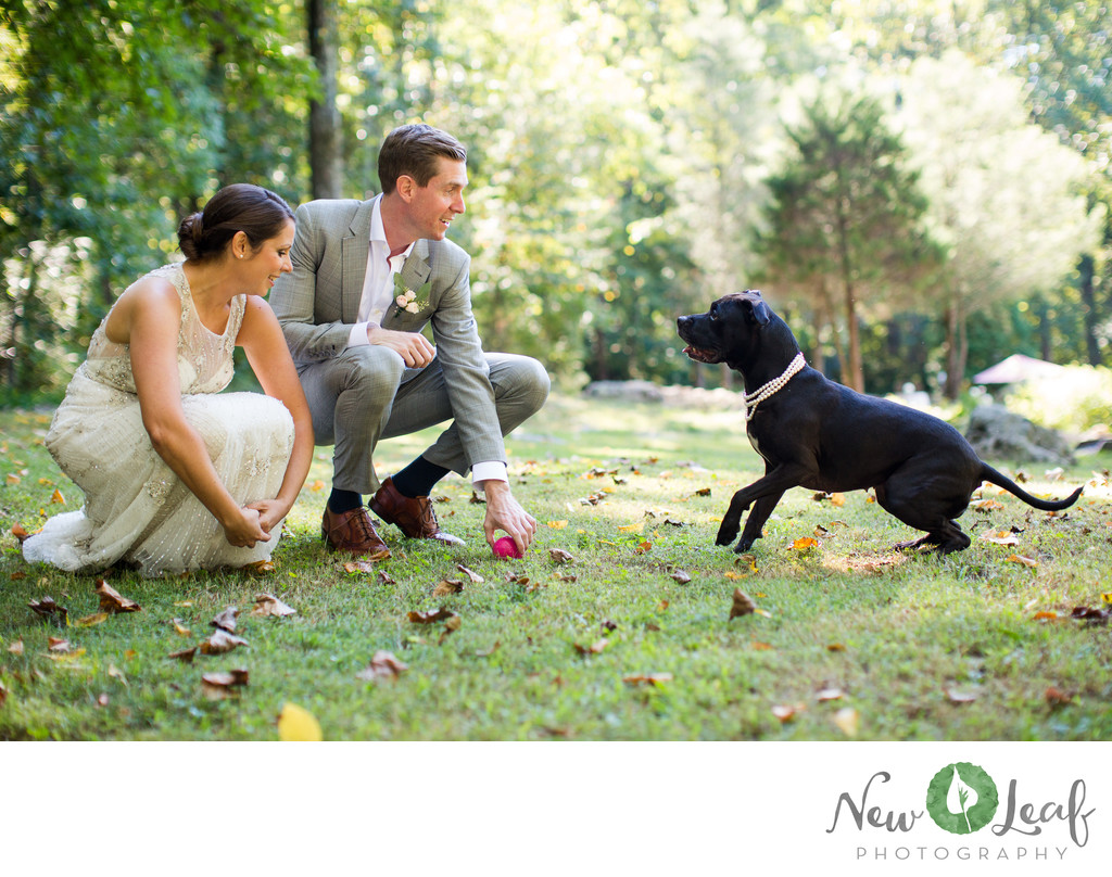 Pet Friendly Wedding Vendors in PA