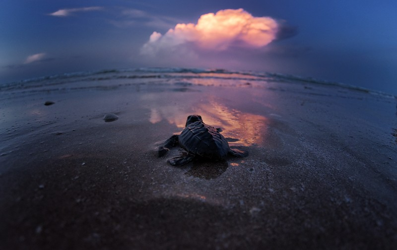 Turtle Photography