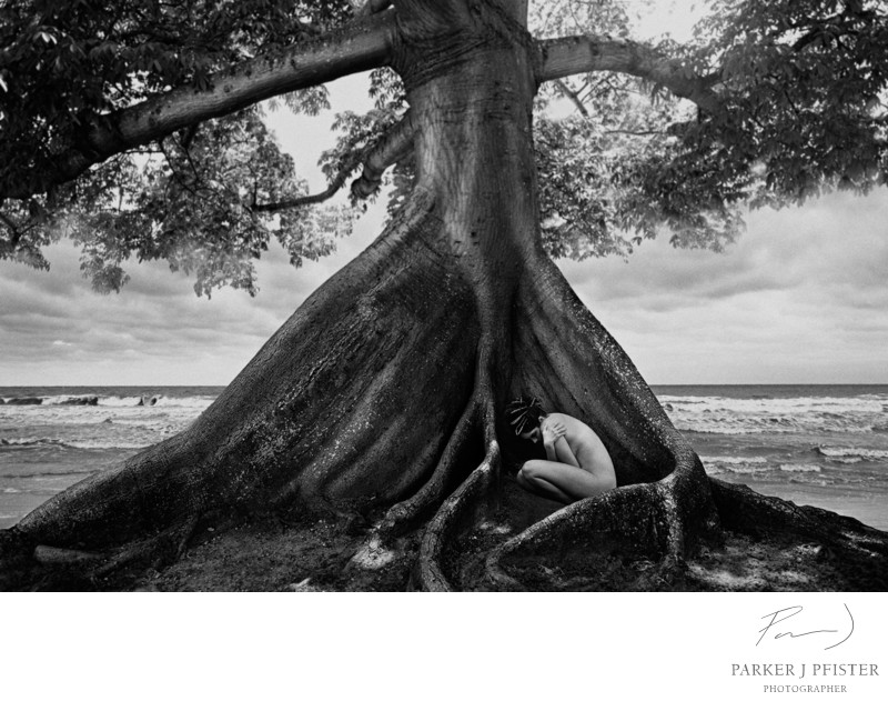 nude tree sea