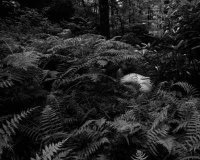 hiding in fern