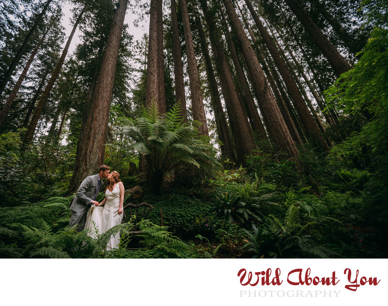 bay area nestldown redwoods wedding photography