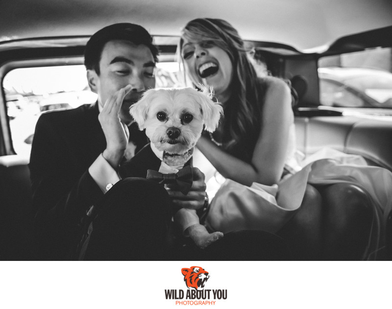 San Francisco Wedding Dog Photography