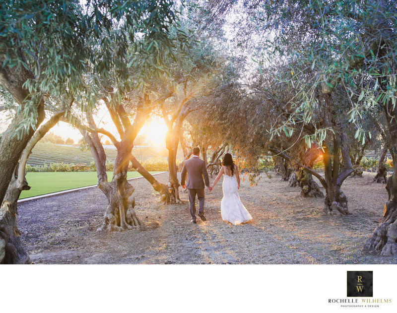 Olive Grove Wedding Leal vineyards
