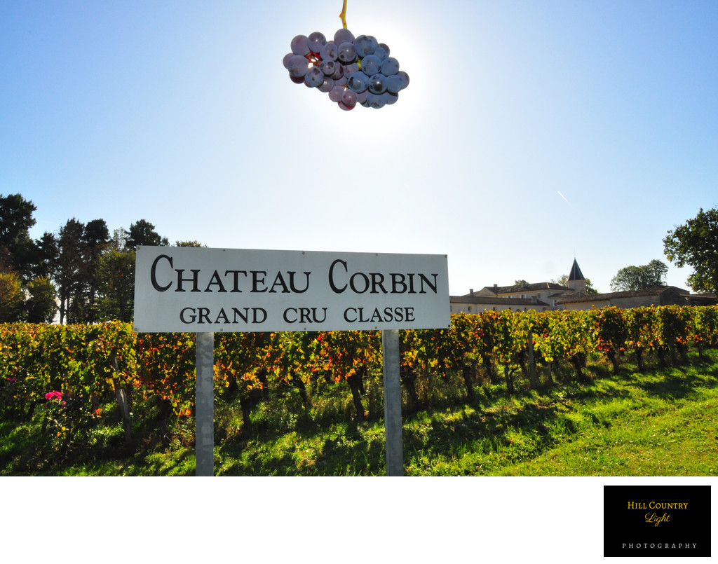Chateau Corbin St Emilion Vineyard harvest Grand Cru Classe