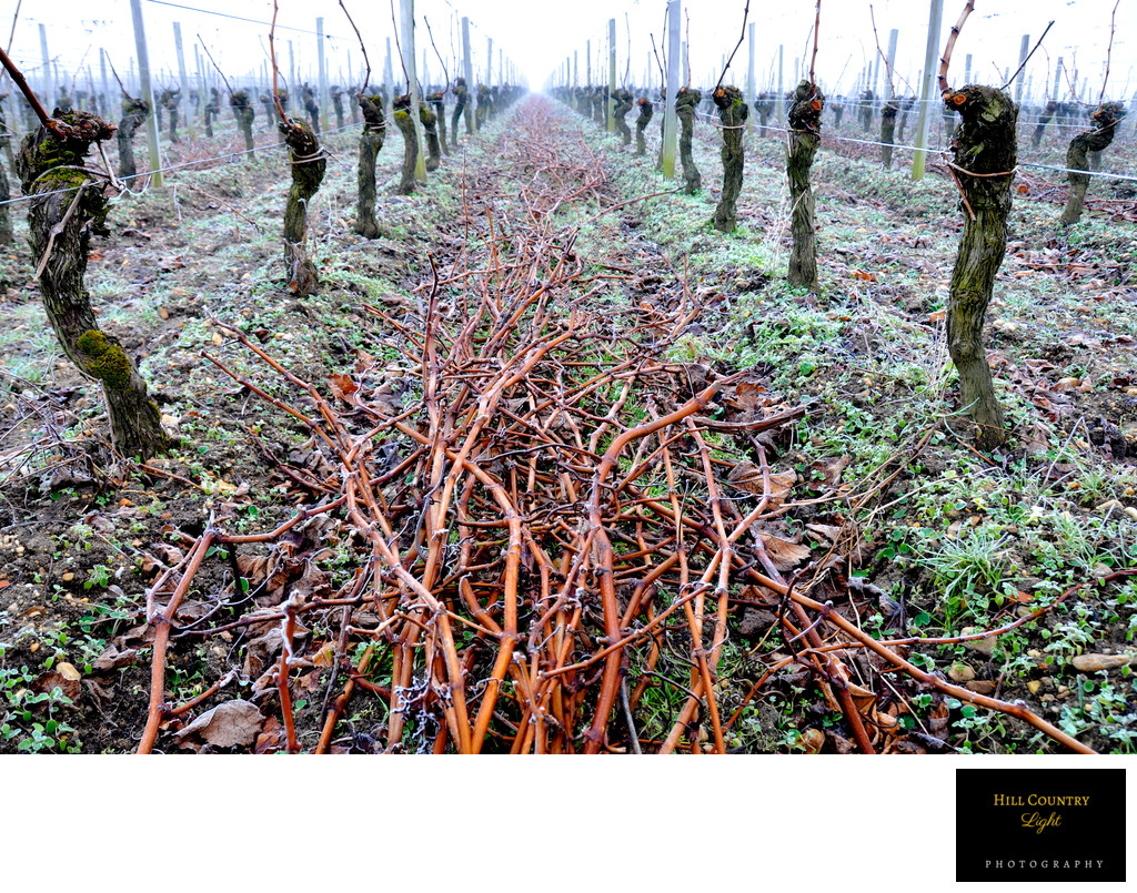 Pruning Cheval Blanc St Emilion Bordeaux World Class Vineyard