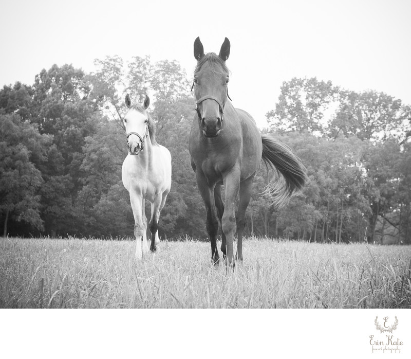 Horses in a Field Photograph