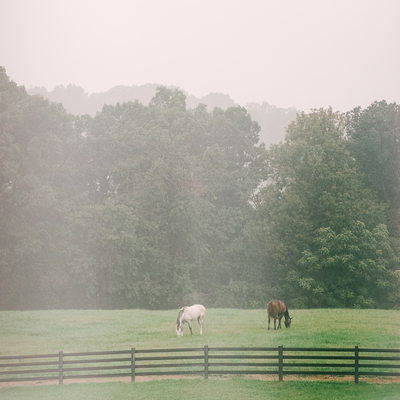Horses Grazing in the Fog