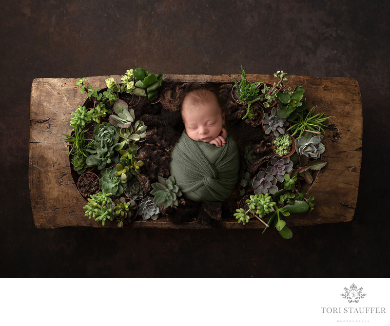 Baby Photography Succulents