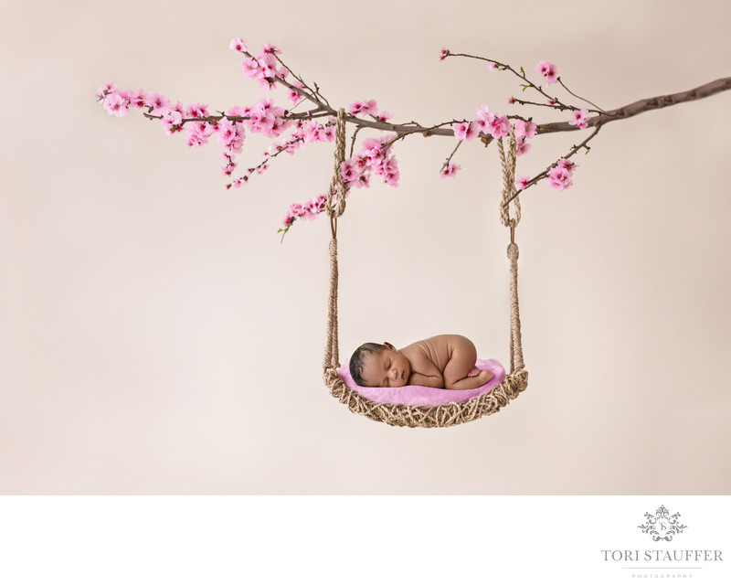Philadelphia Newborn Photographer Hanging Cherry Tree