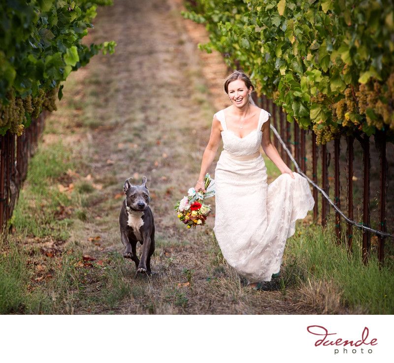 Vine hill house wedding photographer