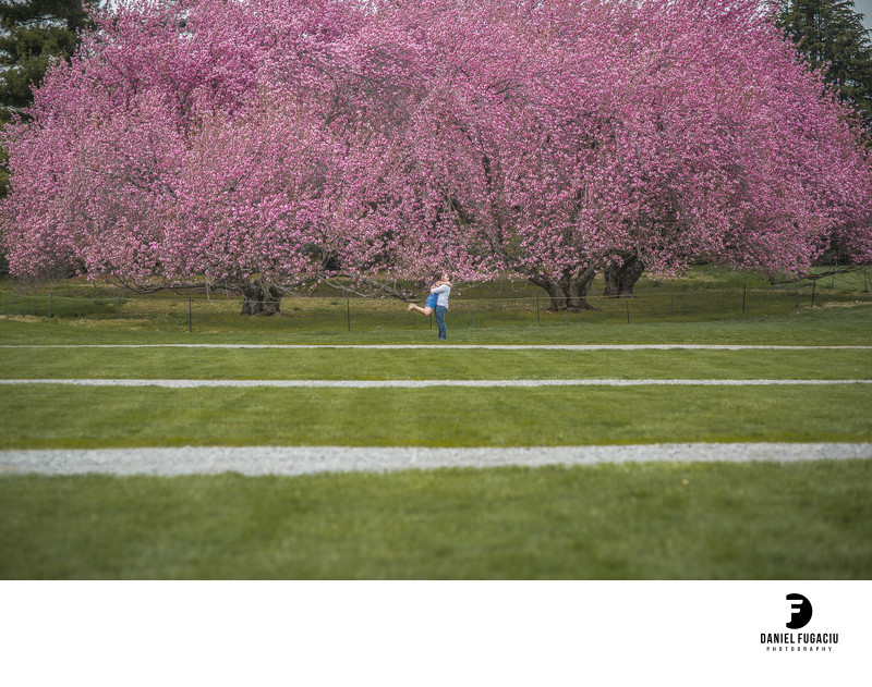 Longwood Gardens cherry blossom engagement photos