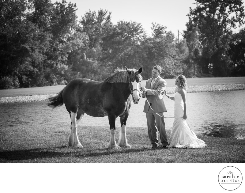 Clydesdale with Bride and Groom in Southern Illinois Wedding Pics