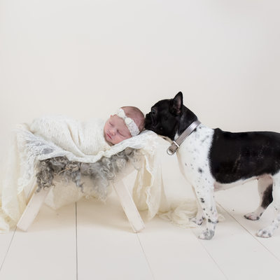 south florida newborn and dog photography