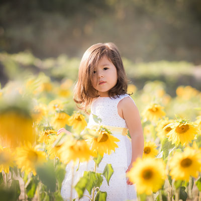 Sunflower field child portrait Palm Beach photographer