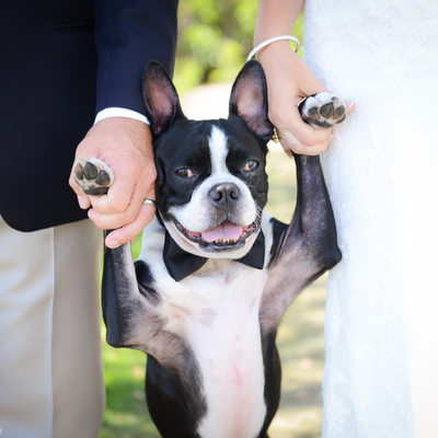 Hopetown Bahamas destination wedding photography dog