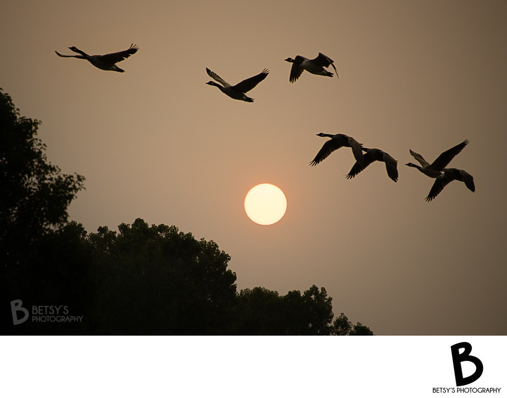 Smoky Sunrise with Geese in Flight