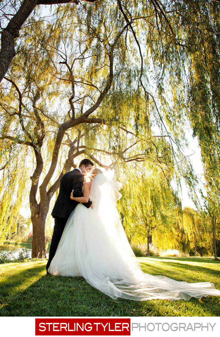 bride kissing groom under willow trees at black swan napa valley