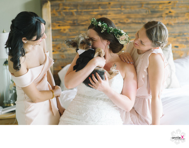 Dog in wedding with bridesmaids