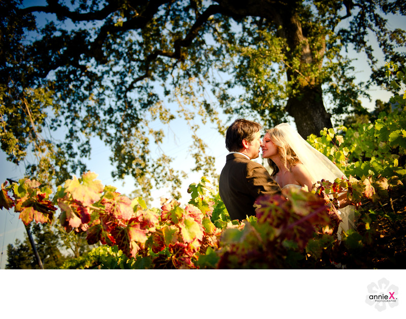 bride and groom in fall vineyards