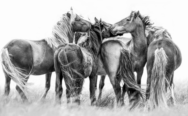 Imagine, Sable Island Bachelors