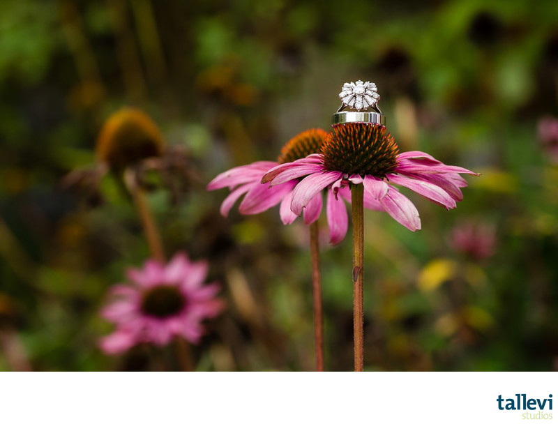 Cheakamus Centre Wedding Photographer