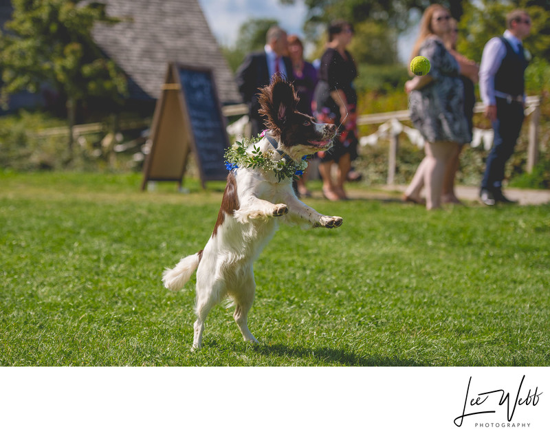 Dog Wedding Photography Worcestershire