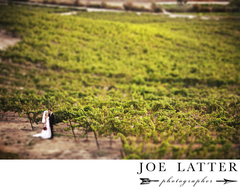 Wedding photograph of bride and groom standing in the vineyard at Falkner Winery in the Temecula wine country of California.