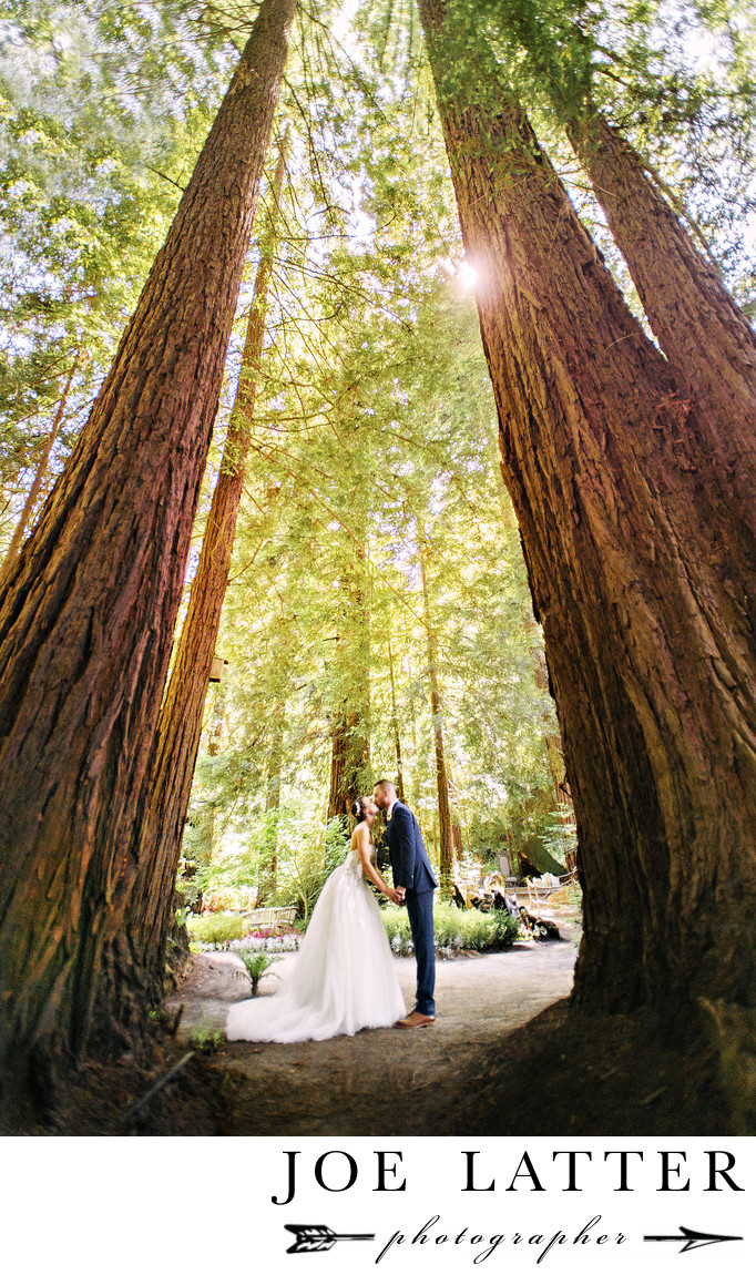 Best Redwoods Forest Wedding Photographer in San Francisco and Northern California