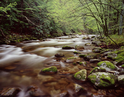 Great Smoky Mountains Tremont Photo