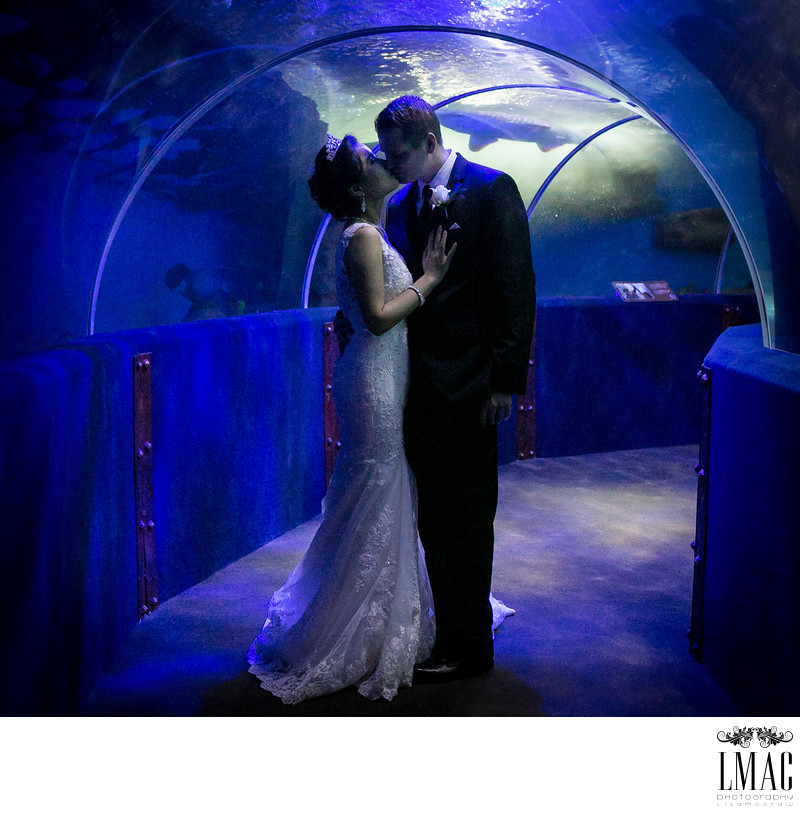 Beautiful Wedding At the Cleveland Aquarium