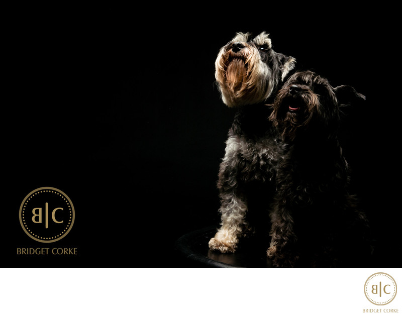 Top Schnitzel Family Dog Johannesburg Studio Photographer