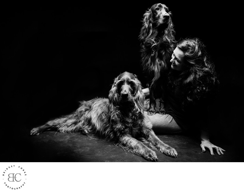 Best Irish Setter Dog Johannesburg Studio Photographer