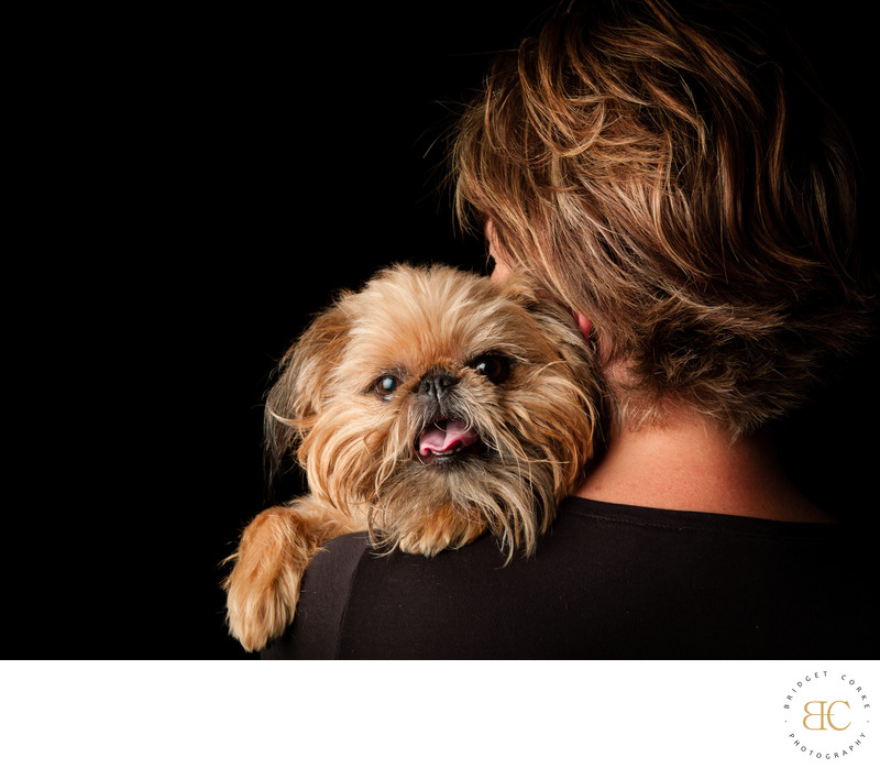 Studio Pet Photographer Johannesburg - Yorkshire Terrier