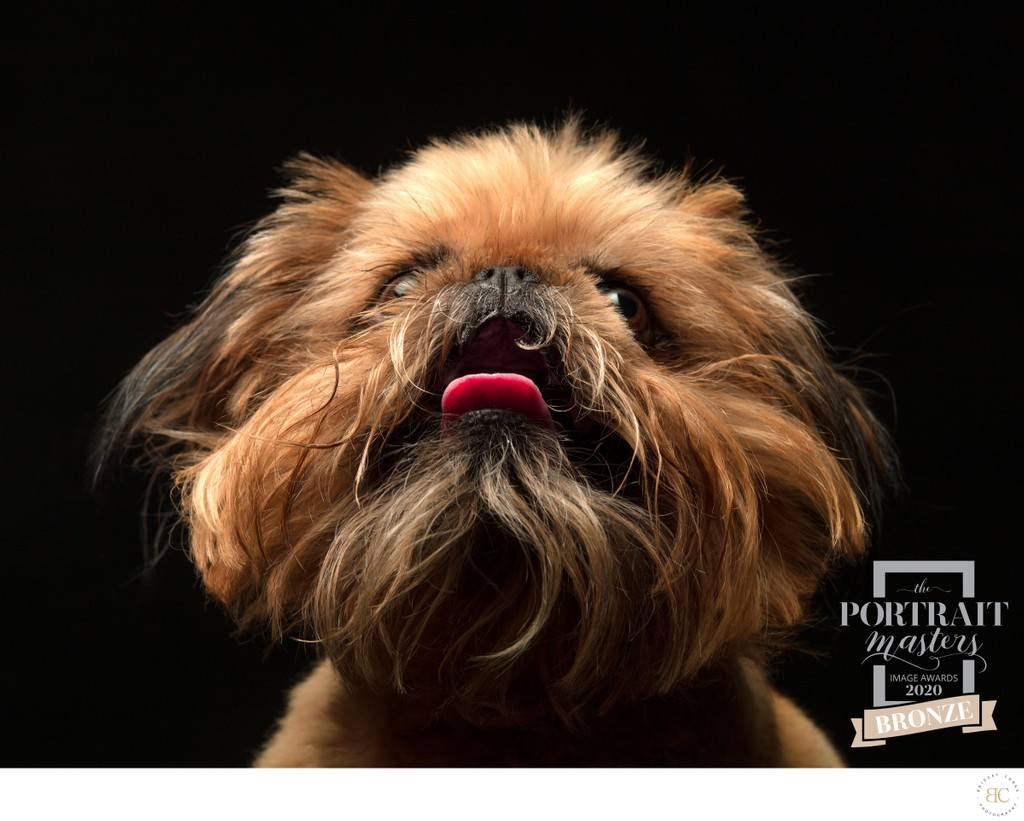 Yorkshire Terrier Pet Photographer Johannesburg