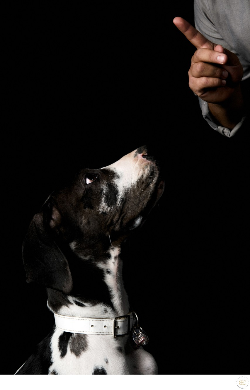 JOHANNESBURG: Professional Dog Studio Photographer