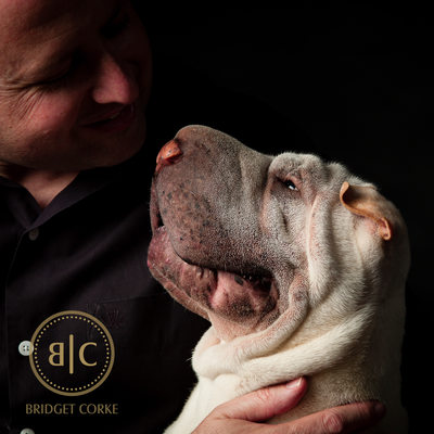 Pet Photography Johannesburg Sharpei