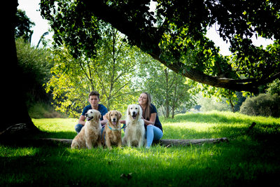 Outdoor Pet Shoot Johannesburg - Golden Retrievers