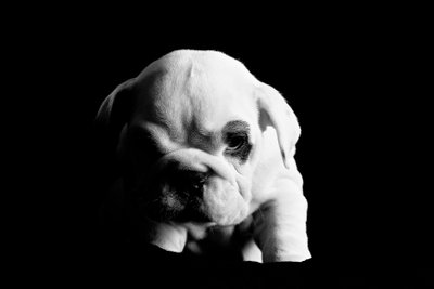 JOHANNESBURG: Top Puppy Studio Photographer
