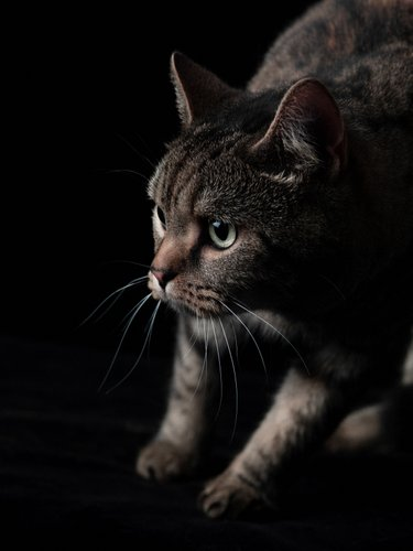 JOHANNESBURG: Cat Photography Studio